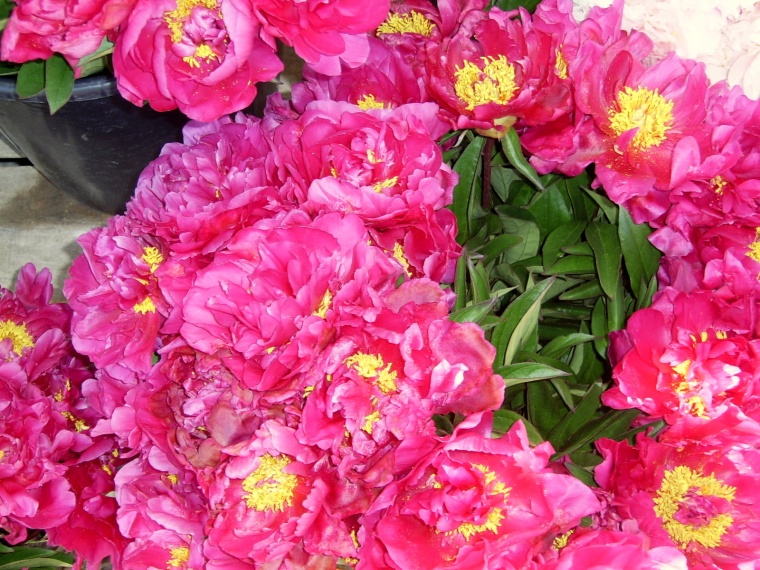 Beautiful peonies in front of Les Halles