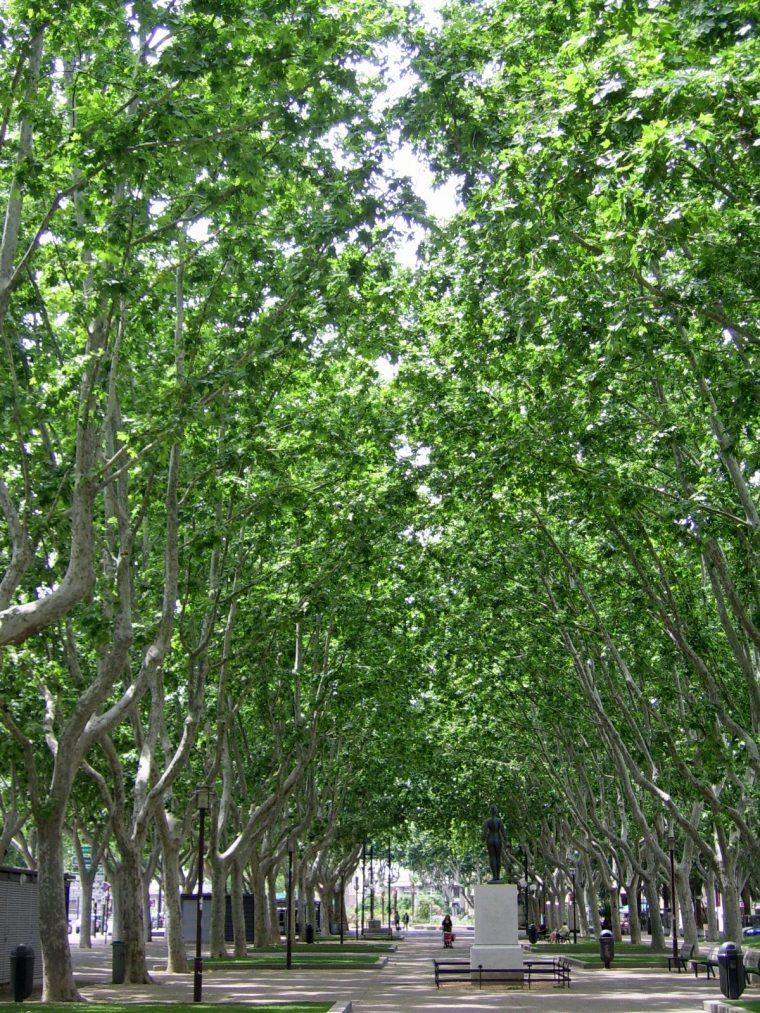 Strolling down the Promenade des Platanes