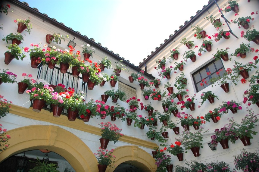 Colorful flowers of a patio in Cordoba