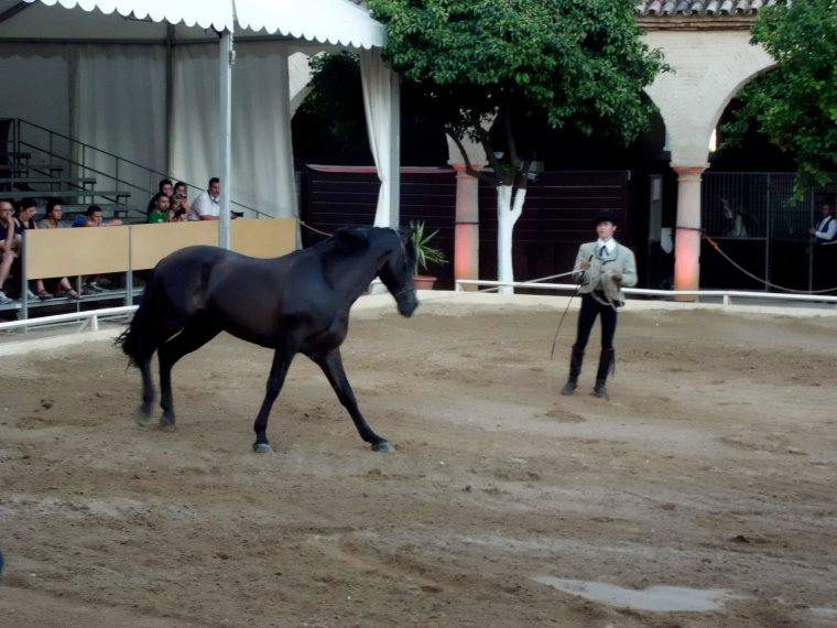 Flamenco and Equestrian Show in Cordoba