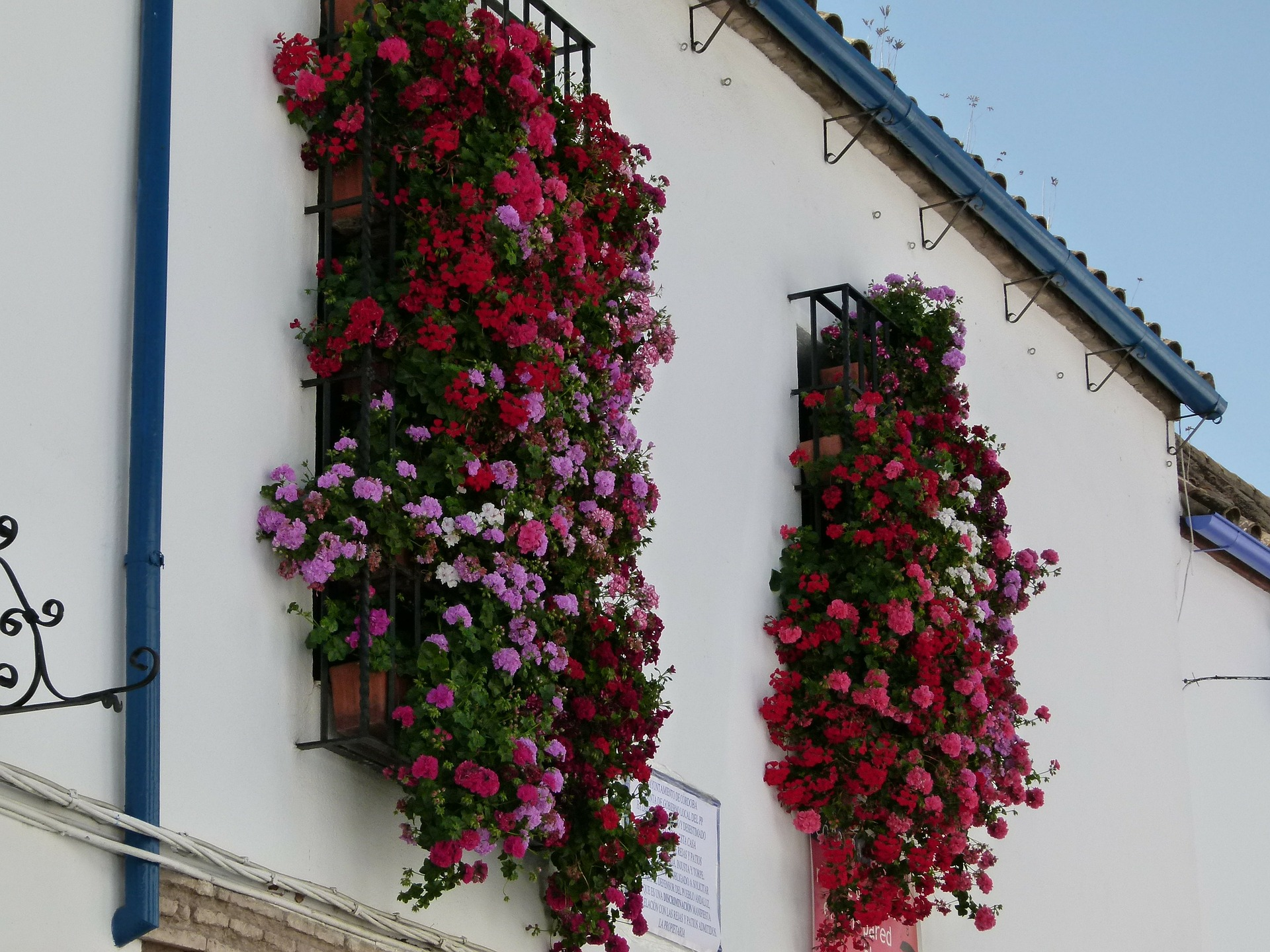 Flowers in the Old Town of Cordoba