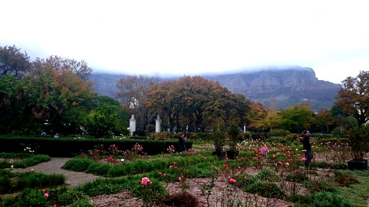 The Company's Garden with Table Mountain under a blanket of clouds
