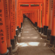 Photo pop-up: Orange hues in Kyoto