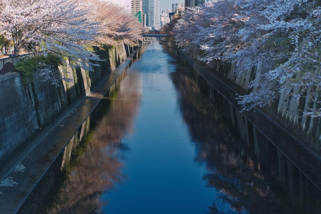 Tokyo Nakameguro Guide - cherry blossoms