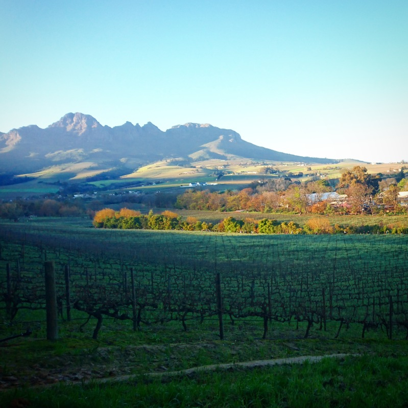 Day trips from Cape Town Stellenbosch valley
